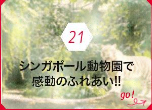 21 シンガポール動物園で感動のふれあい!!