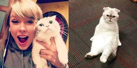 テイラー・スウィフト メレディス オリヴィア 猫 Taylor Swift Meredith Olivia Cat