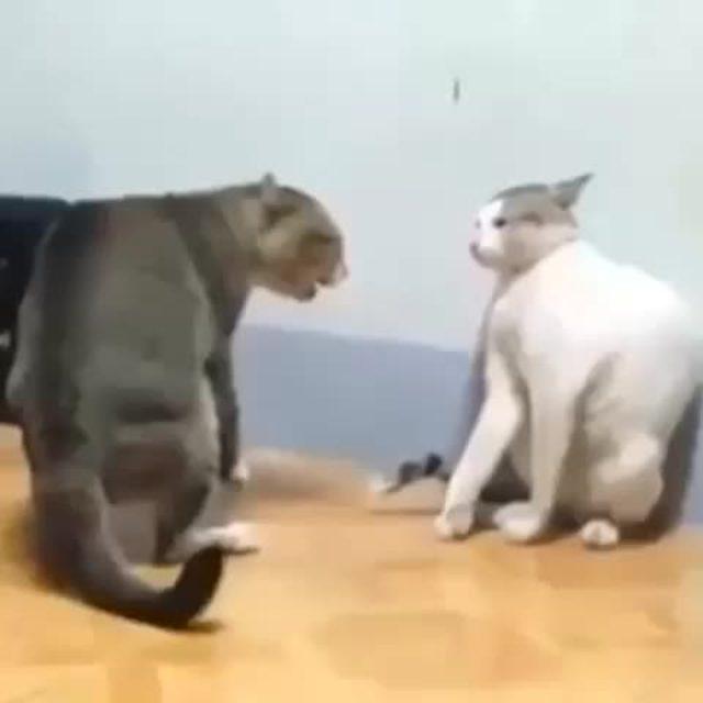 画像1: Vineの動画投稿のテスト2 : 天才ボクサー猫w