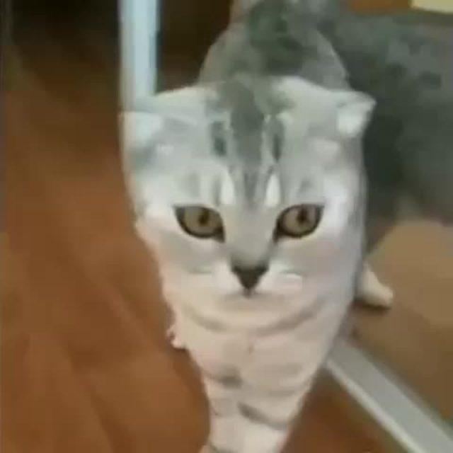 画像1: Vineの動画投稿のテスト3 : お、お前、だれやねん、な猫