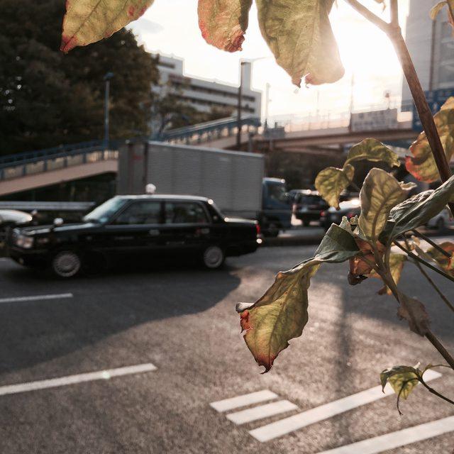 画像: 深まる秋をiPhone6Plusで