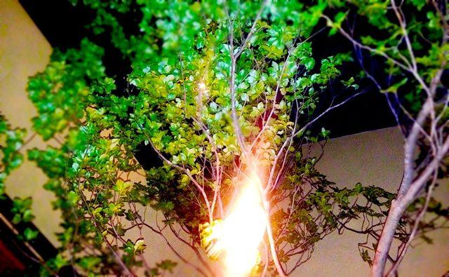 画像: 部屋の中に木