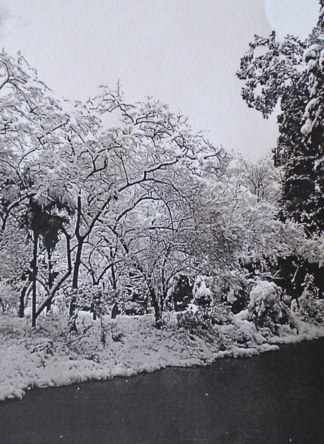 画像: とうよこ沿線編集写真集「わがまちの昔と今」1巻より昭和31年冬の飯田家の氷池(綱島)