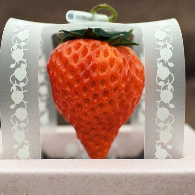 画像: 一粒1000円、世界初の閉鎖型植物工場「いちごカンパニー」(新潟)が、トロみたいにトロける美味さ! #とろける美味しさ #いちごカンパニー #いちこ www.instagram.com