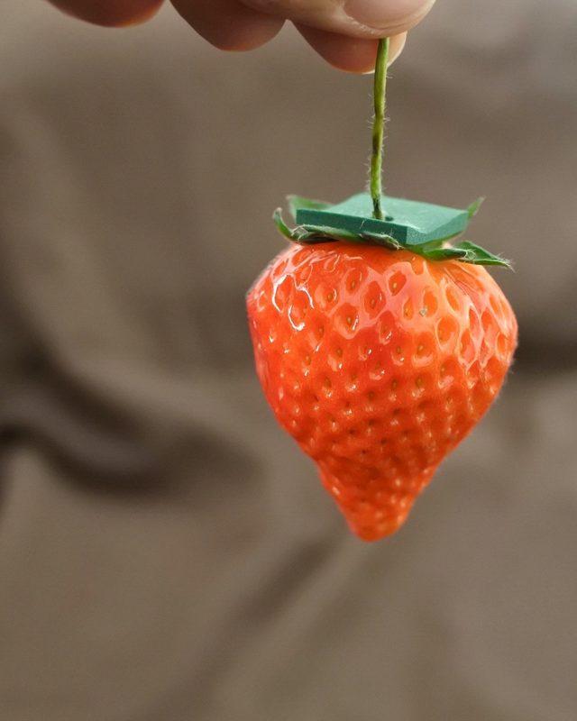 画像: ④ すなわち素人でも美味しいイチゴ栽培ビジネスに参入できる