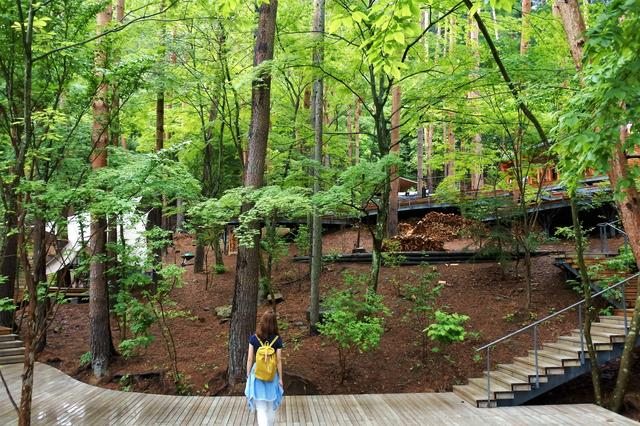 画像: キャビンからさらに上方のアカマツ林に、グランピングアクティビティが用意される「クラウドテラス」がある