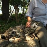 画像: #真夏の木陰 #老人と猫  都会の片隅。散歩中のお年寄りと野良猫。 寄り添いあって生きている。 世間は藪をつつくような事件ばかりで厭になるけれど、こんな光景に癒された。 www.instagram.com