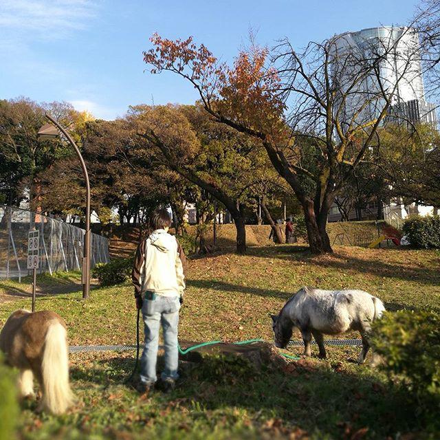 画像: え? #ヒルズ を望む #西麻布 の公園で #ポニー が草を食んどる!! 遠目に #人間よりデカイ犬 がいるかと、焦った( ´∀`) www.instagram.com