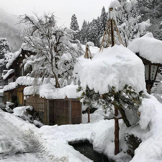 画像: 無事到着! #ツキノワグマ #比良山荘 www.instagram.com