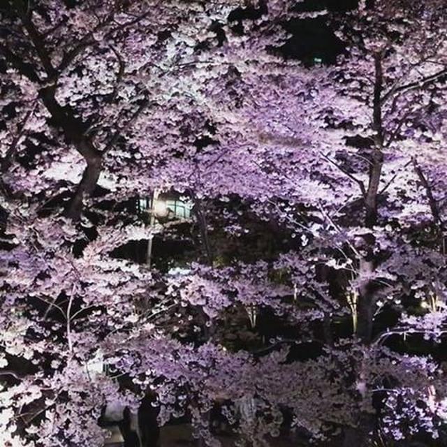 画像: まだ満開だった(笑) #東京ミッドタウン #夜桜 #cherryblossom  #roppongi  #花散らし の男(笑) www.instagram.com