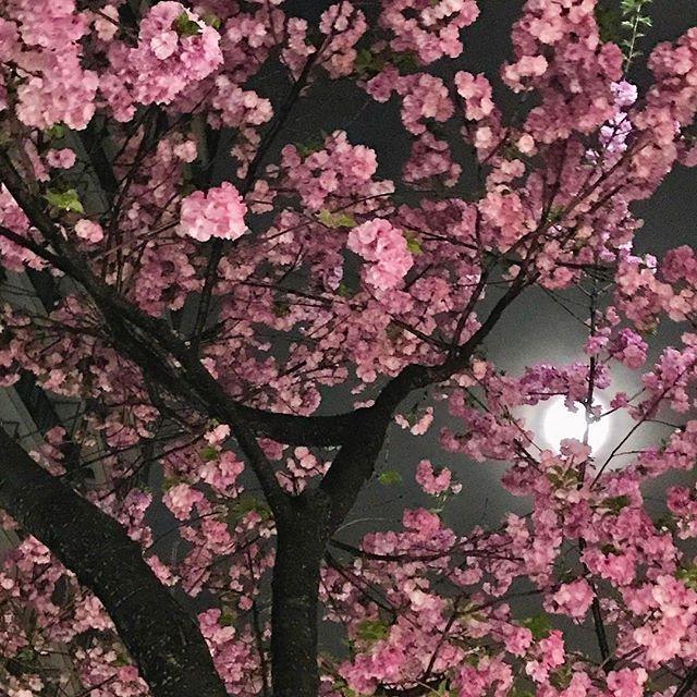 画像: 昨夜は幸運をもたらすという4月の #満月 ピンクムーン これが本当の#ピンクムーン  #pinkmoon www.instagram.com