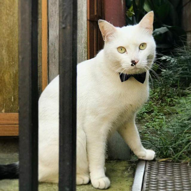 画像: #蝶タイ 猫 こいつ、可愛いかったなあ #猫 #ニャンスタグラム www.instagram.com