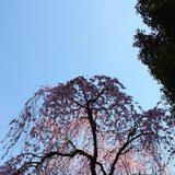 画像: 街がほんのり色気づいてきた~ 春到来~ 浮かれるな~