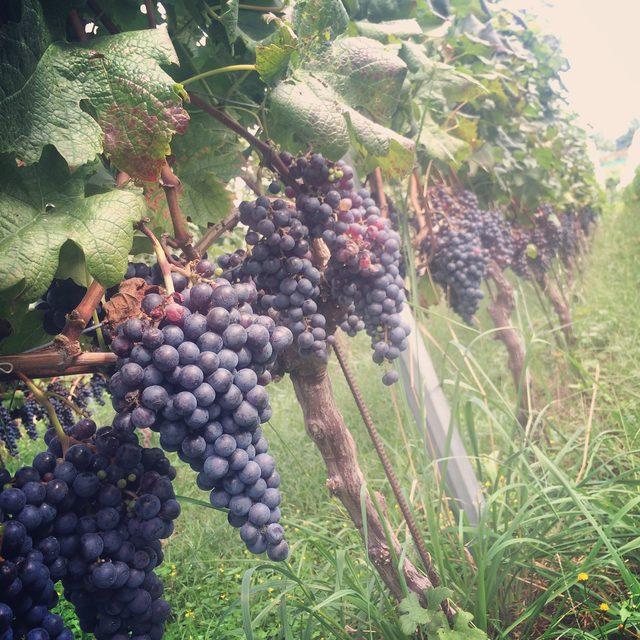 画像2: 世界に挑戦できる 日本ワインを探せ!