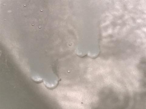 画像: シュワシュワと泡が出てきます。 ここに重炭酸がいるようです!