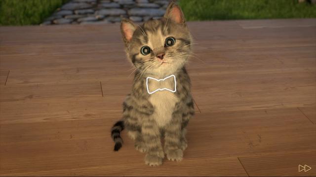 画像2: とっても可愛い迷い猫がうちの子に!