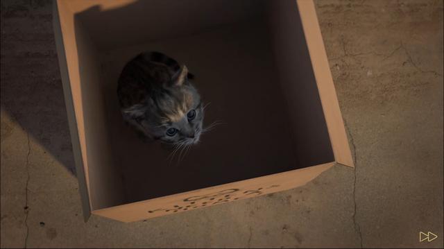 画像1: とっても可愛い迷い猫がうちの子に!