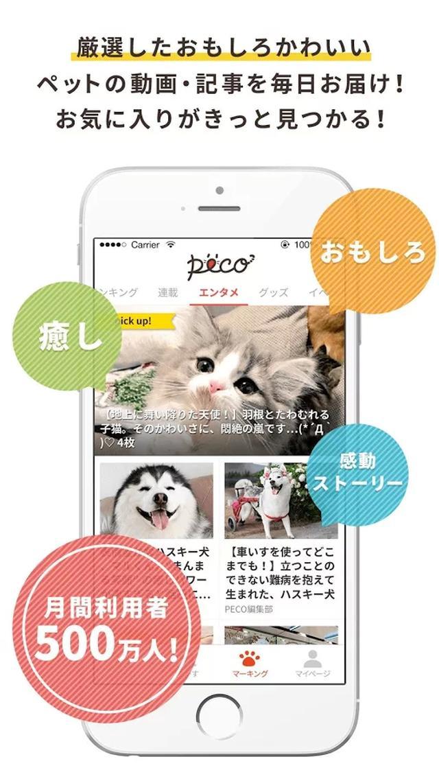 画像: PECO:かわいいペット動画アプリ いぬねこ動画で癒しをお届け - Google Play の Android アプリ
