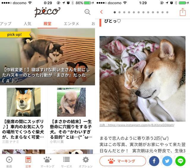 画像2: ペットにまつわるお役立ち情報も読めるんです。