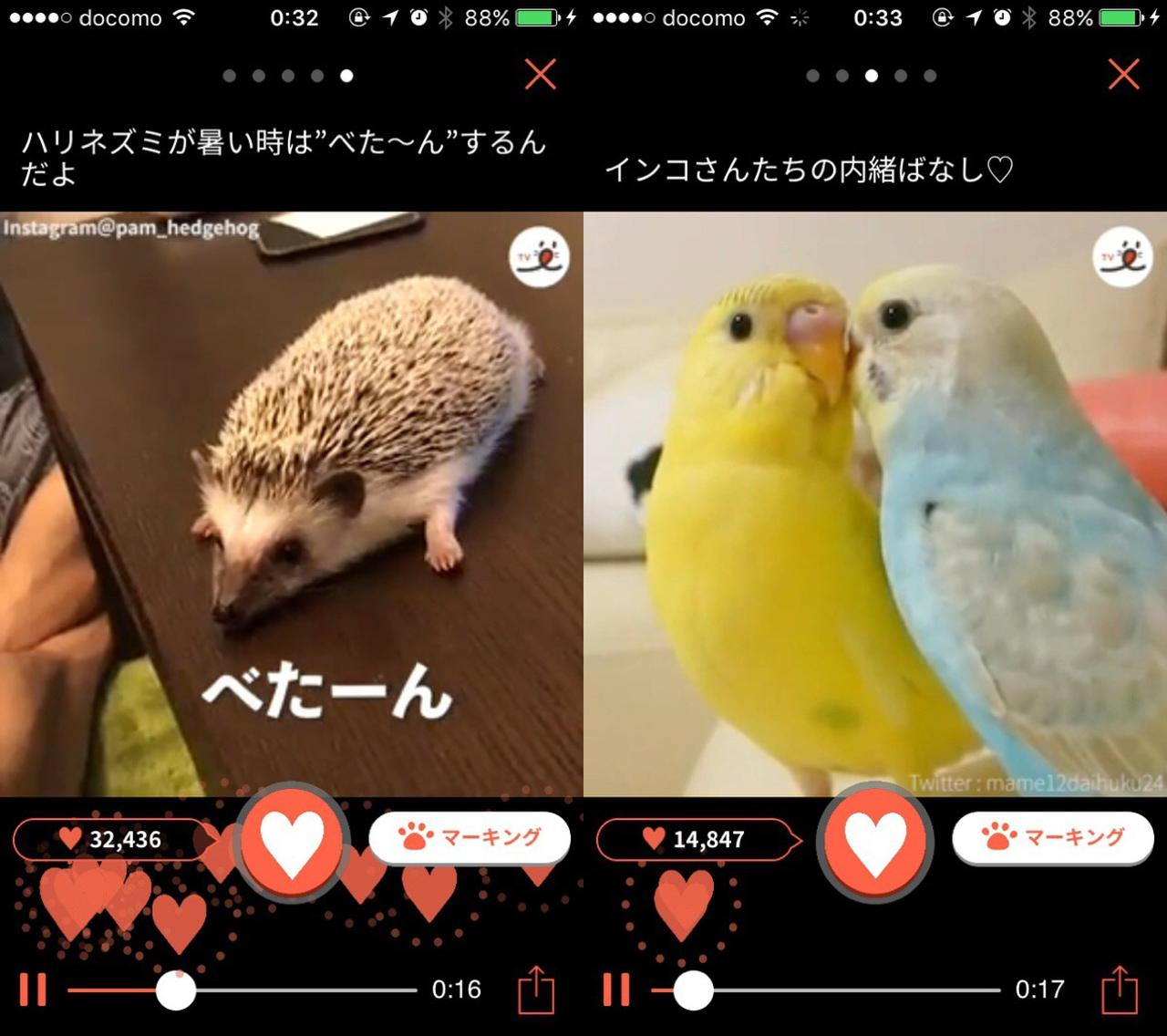 画像2: ハリネズミやインコ、シマリスなどの動画もあります。