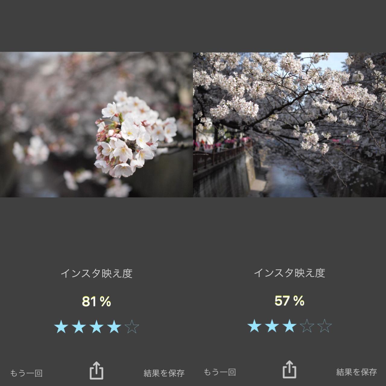 画像: これからシーズンの桜はどれくらいインスタ映えする?