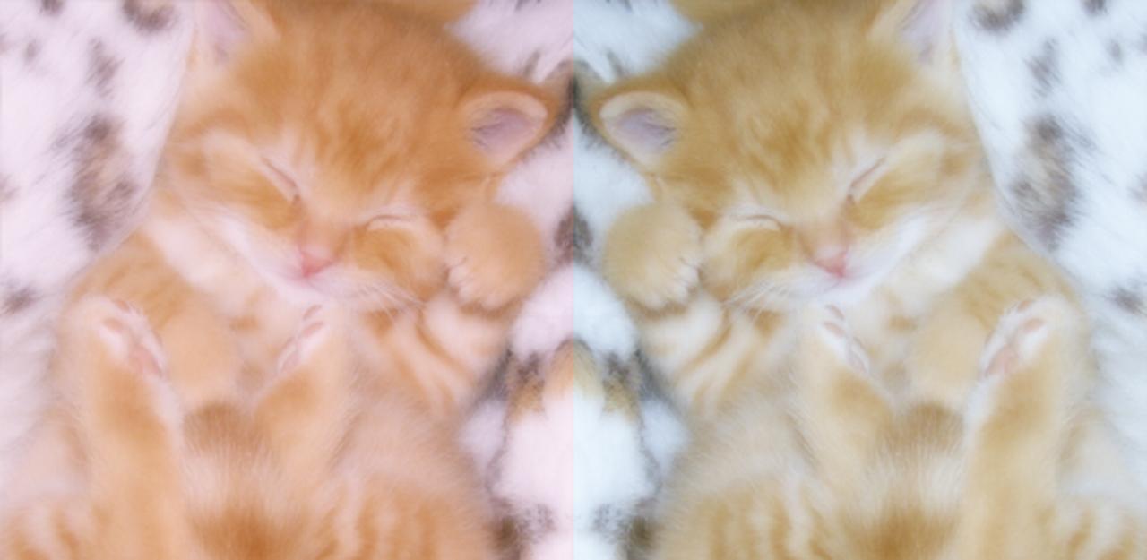 画像: WataameCamera-Soft Photo Editor Like Cotton Candy - Apps on Google Play