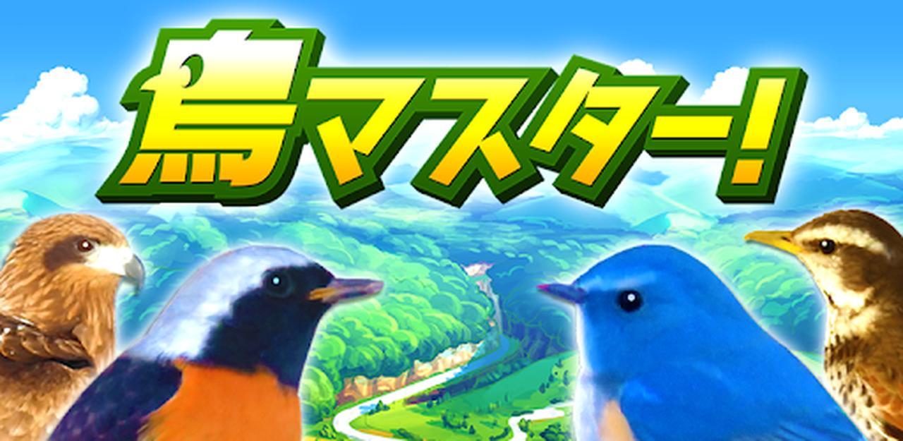 画像: 鳥マスター! - Apps on Google Play