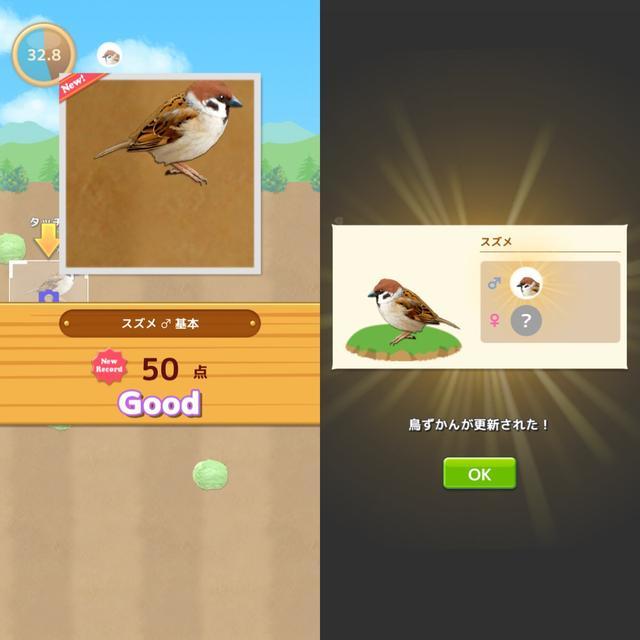 画像4: 野鳥を撮影してどんどんコレクション!まずは撮り方を試してみましょう。