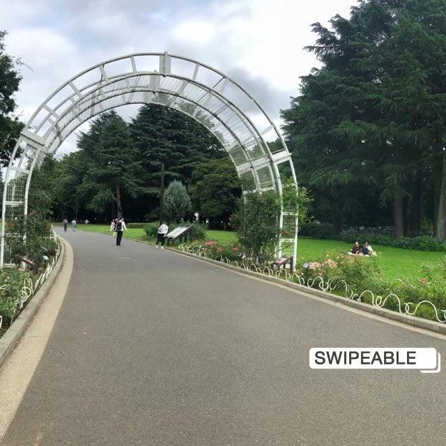 """画像1: Aki Imai (今井安紀) on Instagram: """"パノラマ写真をインスタに載せたい!でもそのままだと長ーくなって見づらい… 正方形化するための枠をつけても3枚目みたいになっちゃいます。 それを解消してくれるアプリがこちらの『Swipeable - パノラマ写真』です。…"""" www.instagram.com"""