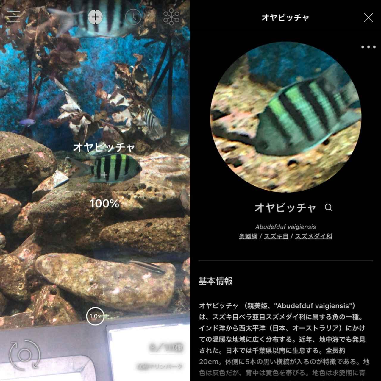 画像4: かざすだけで名前や種類をパッと表示!詳細では生息域などもわかります。