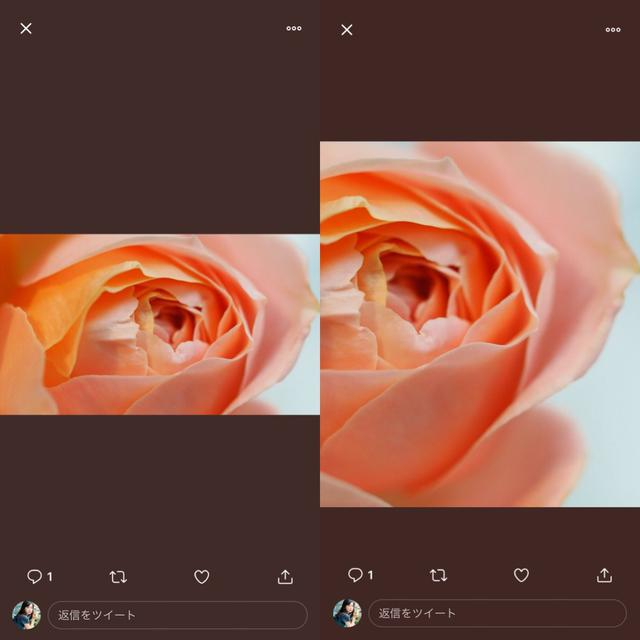 画像3: 画像の枚数ごとにTwitterクライアントで投稿したものと比較してみました。