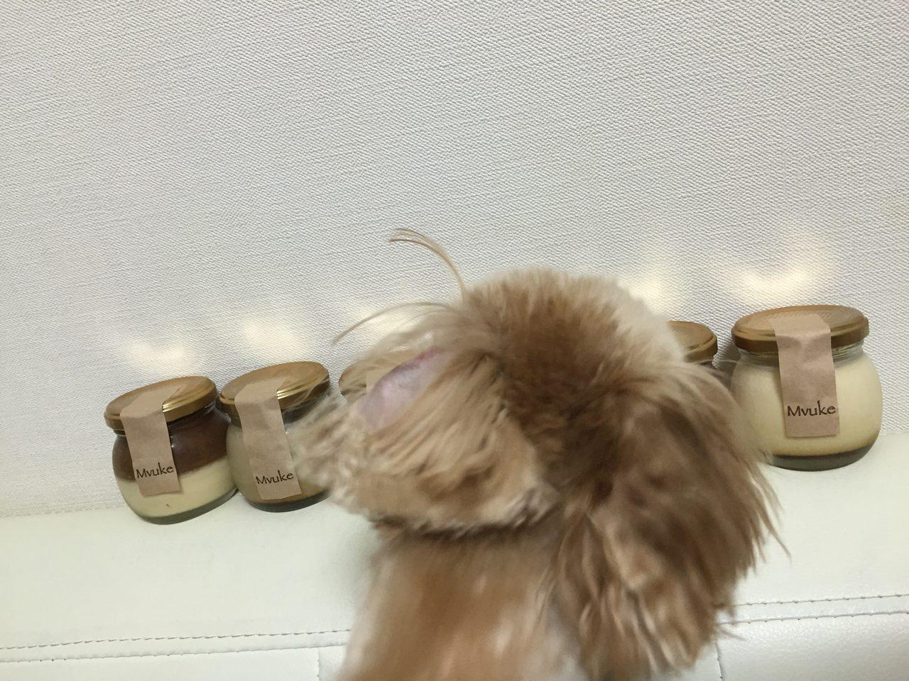 画像: 愛犬のアニーちゃんも気になるっぽい。 店舗販売、ネット販売もしています♪ 気になる方は、要チェック♡ 尾崎のオススメプリンでした♡