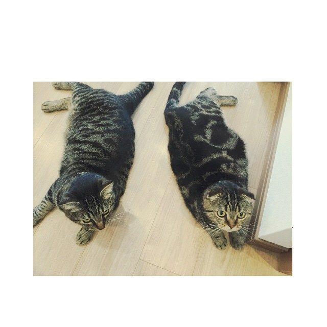 画像: #双子みたい #cat  事務所のじんちゃん&メロンちゃん #猫の可愛さにも気づいてしまった instagram.com
