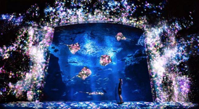 画像: 花と魚- 相模湾大水槽 / Flowers and Fish- Enoshima Aquarium Big Sagami Bay Tank チームラボ, 2015, インタラクティブデジタルインスタレーション, 音楽:高橋英明 相模湾大水槽のあたり一面がプロジェクションされ、花々が咲き渡るアート空間となる。 プロジェクションの光は、水槽照明よりもさらに弱いものだが、映像そのものが水槽照明に代わるやさしい光となって空間を照らす。そして大水槽の周りの花々は、魚が近くを横切ると、いっせいに散っていく。 作品は、あらかじめ記録された映像を再生しているわけではなく、魚たちの動きに影響を受けながら、永遠と変容し続け、今この瞬間の絵は、2度と見ることができない。 www.team-lab.net