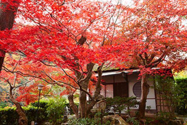 画像: 翠嵐 ラグジュアリーコレクションホテル 京都 公式サイト | Suiran, a Luxury Collection Hotel, Kyoto