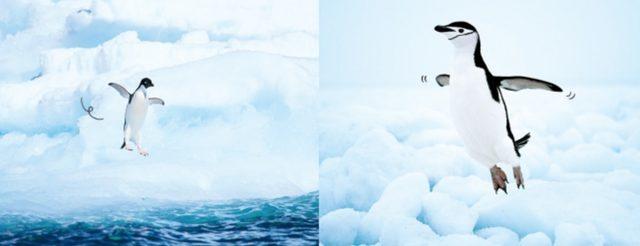 画像2: 海の動物から陸の動物まで。いろいろあるけど、とりあえず跳んでみたら、いーんじゃない?