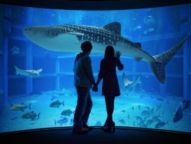 画像1: 世界最大級の水族館&大阪ベイエリアを満喫!