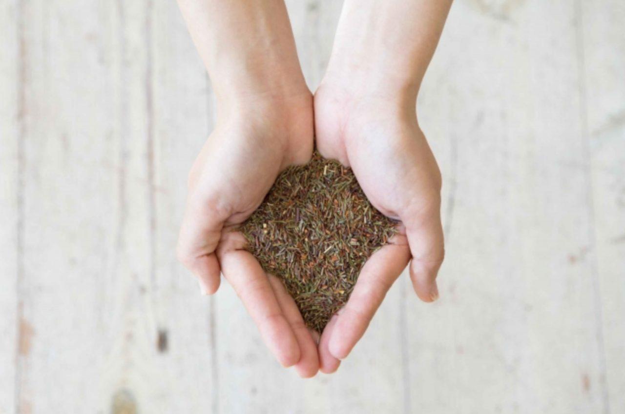 画像1: Lara Republicから希少な茶葉を使用したオーガニックルイボスティーが新発売!