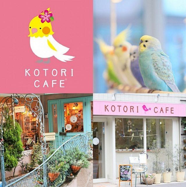 画像: 人気の鳥カフェ関西初出店!「ことりカフェ心斎橋」