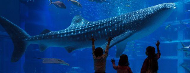 画像: 世界最大級の水族館 海遊館