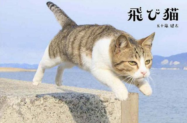 画像: 飛び猫パネル展