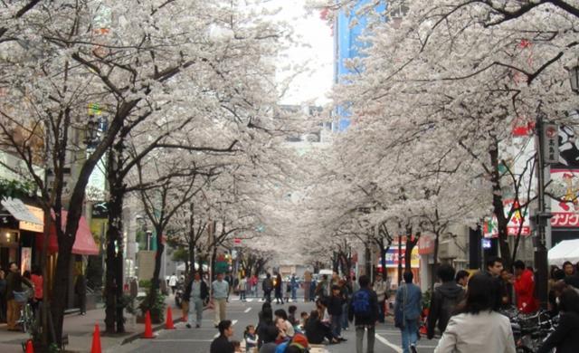 画像: 『サラベス 東京店』 ルーフトップテラスから桜並⽊を望む…