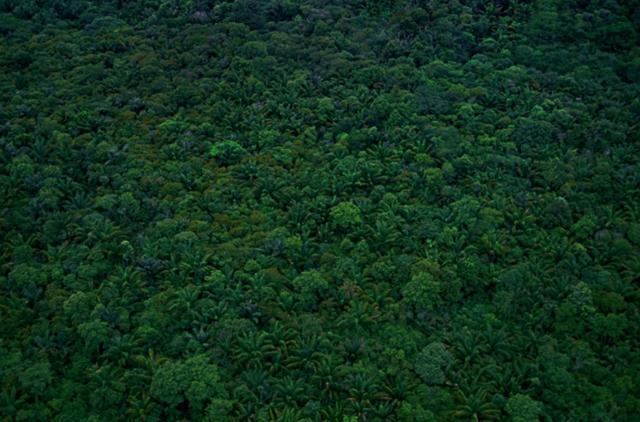 画像: Brazil.日本の約20倍というとてつもない広さの世界最大の熱帯雨林、アマゾン。