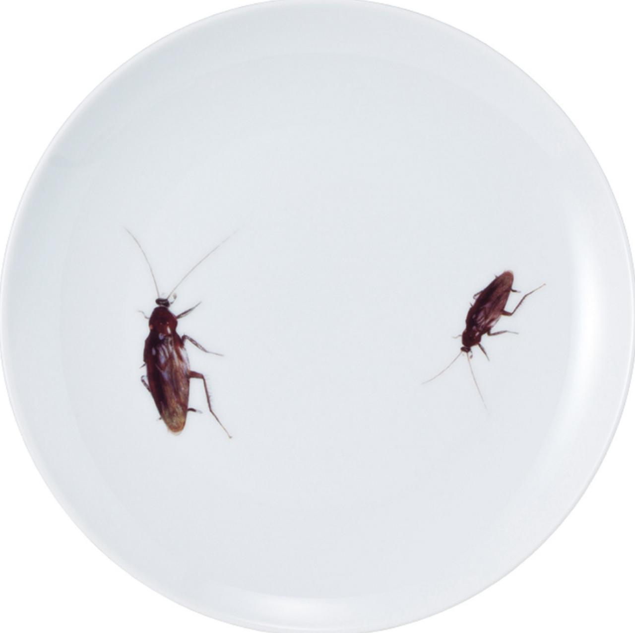 画像: ・ゴキブリ皿