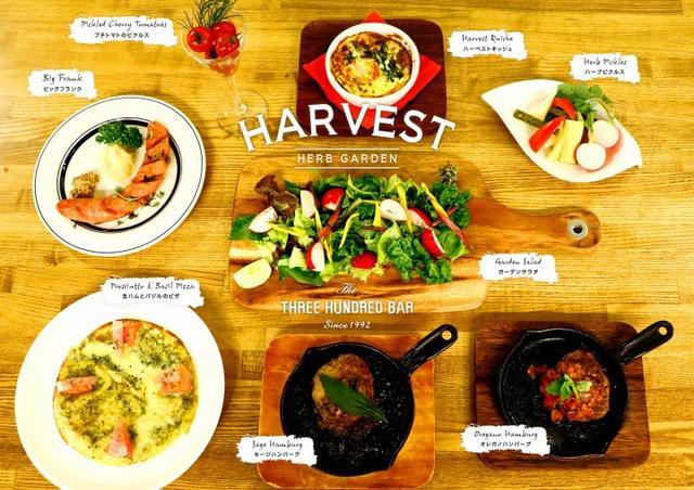 画像3: ハーブを使用したカクテルや無農薬野菜を使った料理を楽しむ収穫祭『HARVEST ハーベストVol.4』