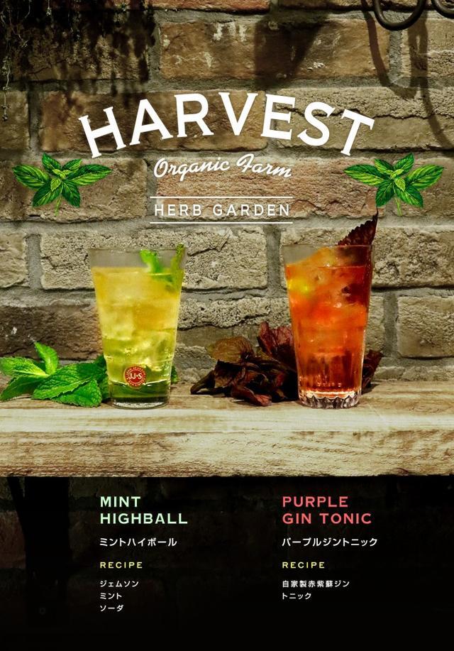 画像1: ハーブを使用したカクテルや無農薬野菜を使った料理を楽しむ収穫祭『HARVEST ハーベストVol.4』