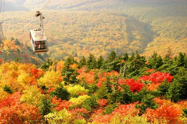 画像: 一面に広がる紅葉を上空から堪能 八甲田ロープウェイ