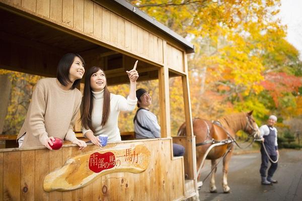 画像: 朝:馬とりんごと楽しむ公園めぐり
