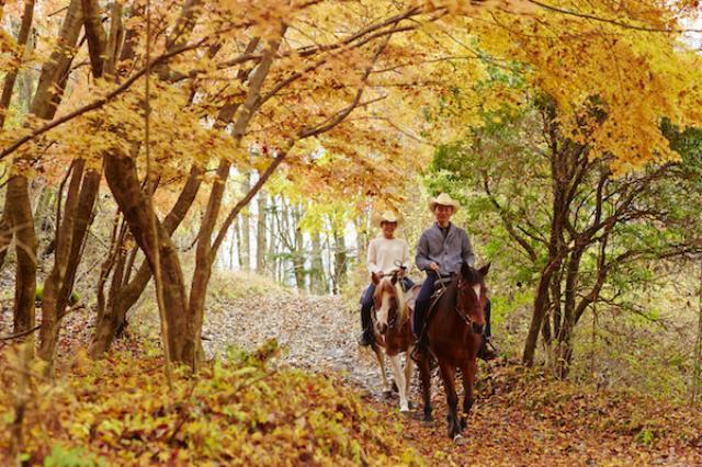 画像: はじめての方でも安心の乗馬体験