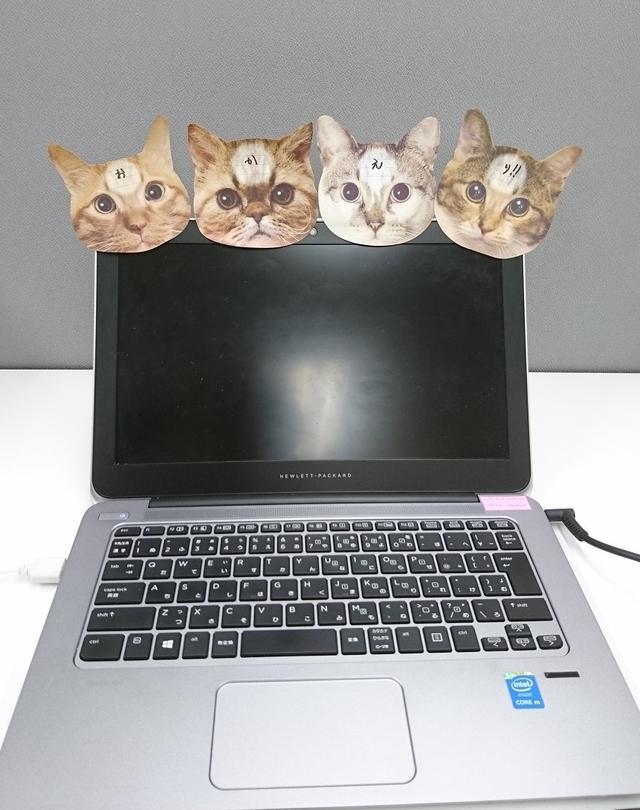 画像: 4匹揃えるとこんなこともできちゃいます!みんなが待っていてくれたかのようなこの癒し・・・「お・か・え・り!」